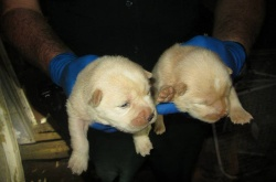 Puppies found #Chunkshouse #dog #Florida #pets