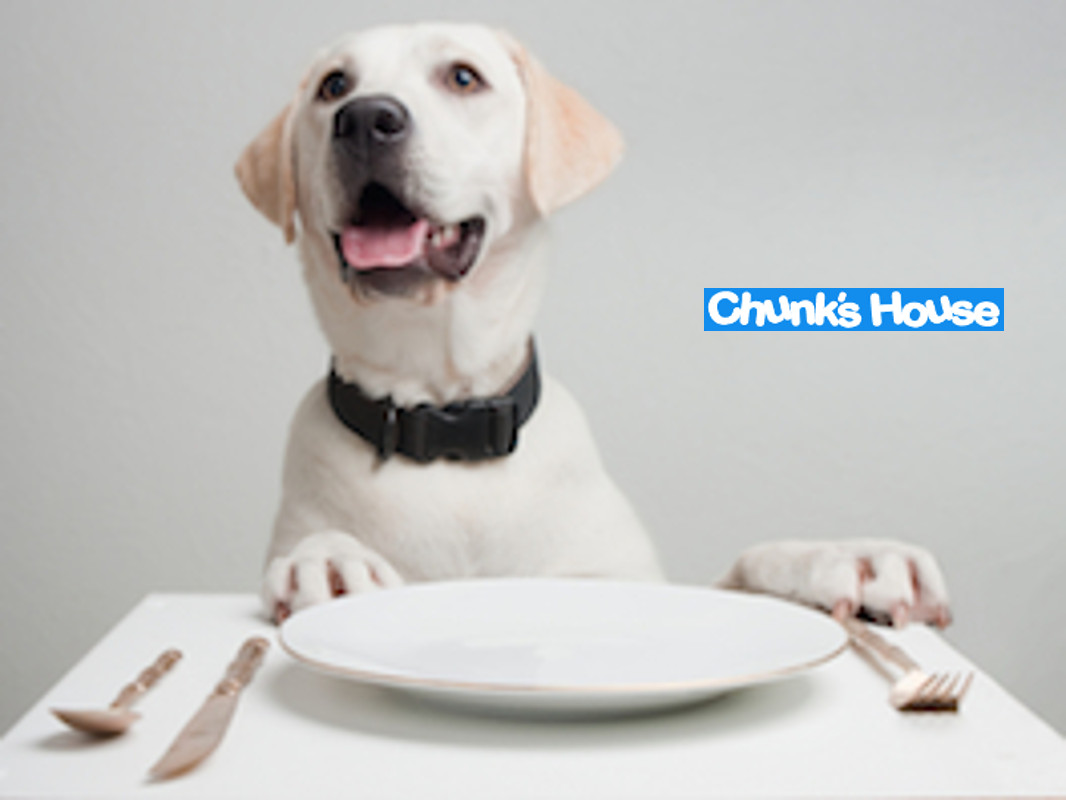 Dog dinner at chunkshouse.com