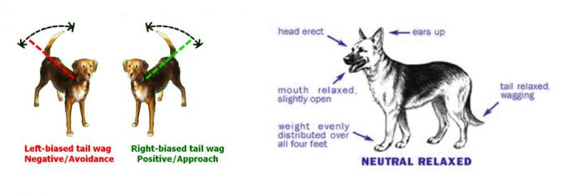 dogs, chunkshouse.com, chunks house, dog tails, tails, pets