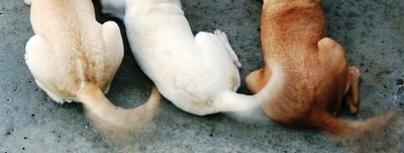 dogs, chunks house, chunkshouse.com, pets, dog tails